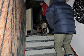 Photo: Bayla på vei inn i søk i neste etasje