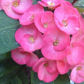 Fresh flower by Indhumathi Karthikeyan - Instagram & Mobile iPhone