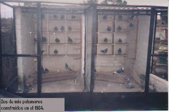 Photo: Dos de mis palomares de cría construidos en el 1984.