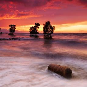 floating log by Rodrigo Layug - Landscapes Waterscapes ( nature, sunrise, seascape, log )