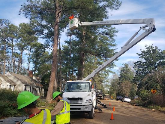 Tree Service Brandon MS