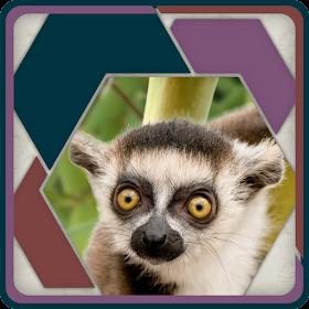 HexSaw - Zoo