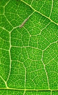 Game Caterpillar simulator APK for Windows Phone