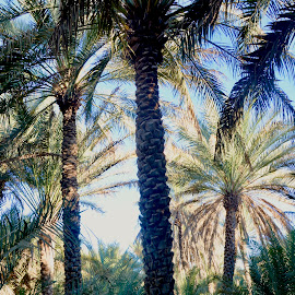 Oasis in the Desert by Nadeem M Siddiqui - Nature Up Close Trees & Bushes