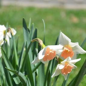 by Ian  Rivera - Flowers Flower Gardens