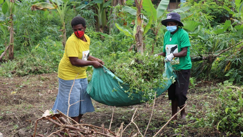 Can school gardens help alleviate the economic impact of COVID-19 in the Pacific?