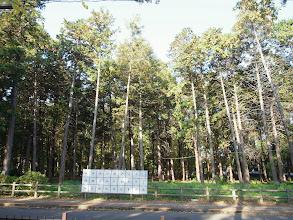Photo: 伐採が予定されている中央公園雑木林。多摩川上水遊歩道からの眺め。