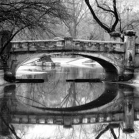 Cismigiu Bridge by Mircea Bogdan - City,  Street & Park  City Parks ( park, lake, bridge )