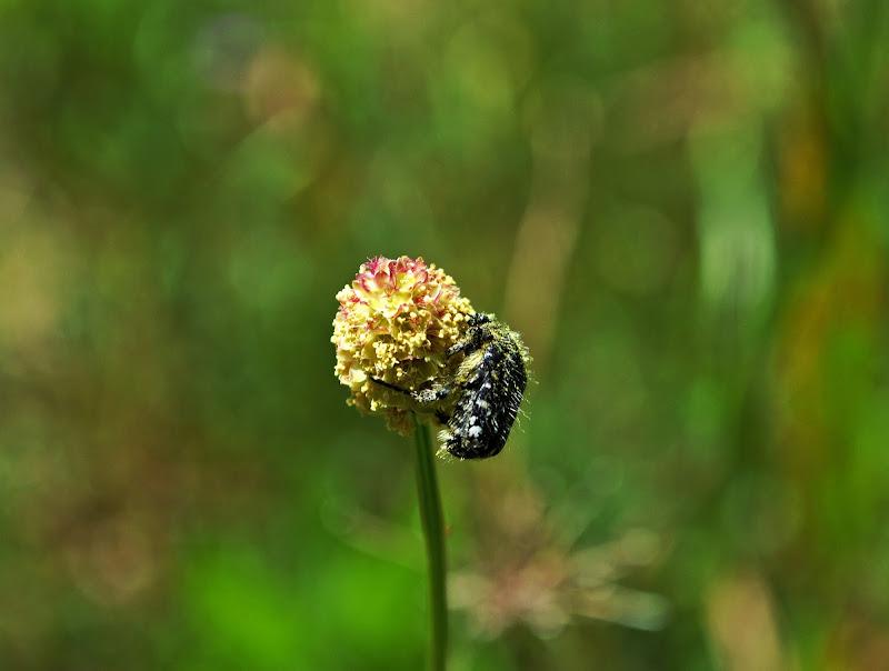 Aggrappati ad un fiore di lorenzo_biag88