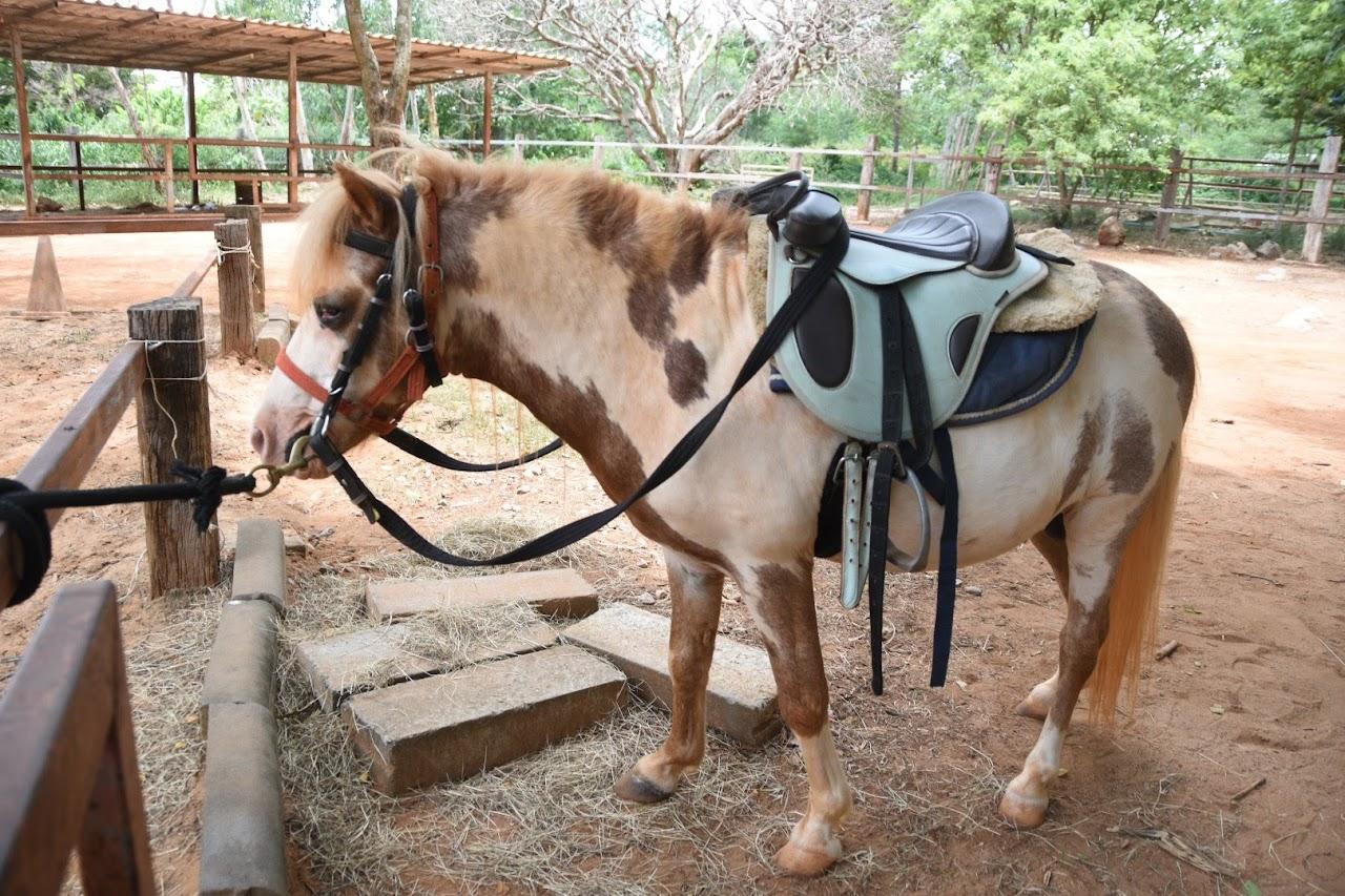カオヤイ・モーポー牧場 乗馬用ポニー