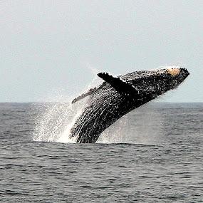 by Patrick Simon - Animals Sea Creatures
