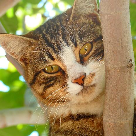 Cats Wallpaper