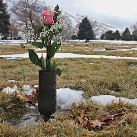 Grave in Winter by Tony Huffaker - City,  Street & Park  Cemeteries ( cemetary, grave, snow, plant, winter, flower )