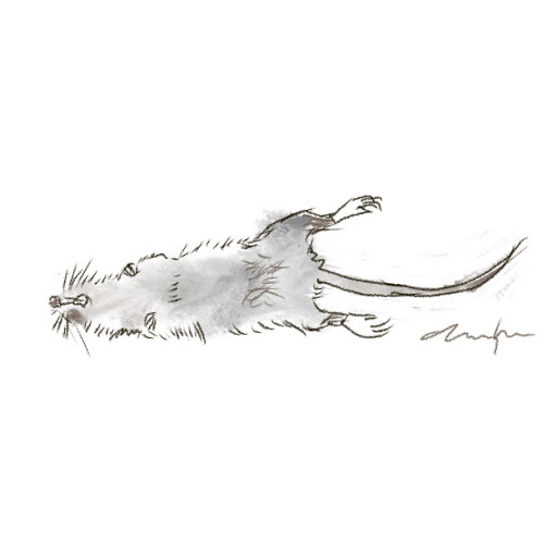 alas poor rat