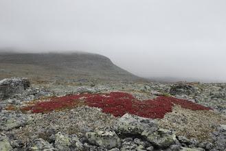 Kuva: Vähän löytyi väriä täältäkin kivien välistä