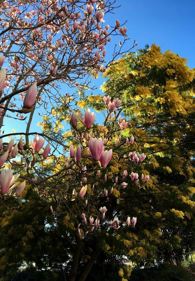 Marzo...in fiore ! di luisa_dbl