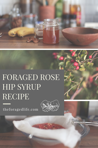 Foraged Rose Hip Syrup Recipe by The Foraged Life