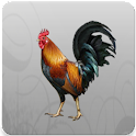 Images Gamecocks icon