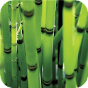 Bamboo forest Green wallpapers icon