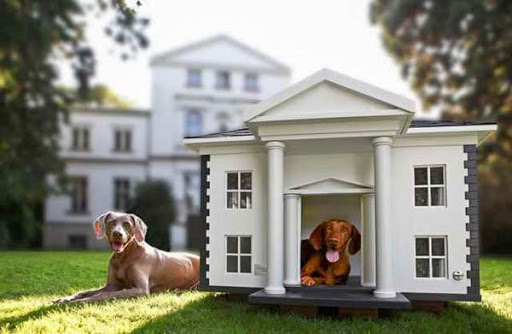 宠物屋设计理念