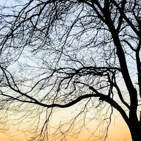 Branch Cupping the Sunset by Jennifer Smusz - Landscapes Sunsets & Sunrises ( #greatlakes, #bluff, #sunset, #lakeshore, #lakemichigan )