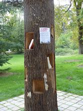 Photo: Chatenay-Malabry -Parc de la Vallée aux Loups -Maison de Chateaubriand - arbre à livres