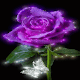 Purple Shine Rose LWP for PC-Windows 7,8,10 and Mac