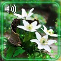 Spring Forest Live Wallpaper icon