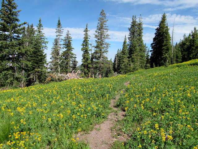 Wildflowers in the saddle between Haystack and Burro Ridge