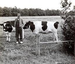 Photo: Roelof Vedder zijn laatste koeien