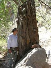 Photo: Oscar loves trees!