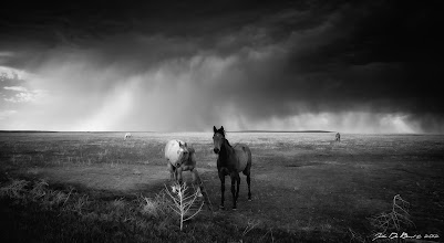 Photo: Horses In The Storm B&W Photo thoughts--- You can see the color version here on G+ which I posted a few days agohttps://plus.google.com/103586615087663445665/posts/XxmzP95MJNc This is one of the first photos I processed using Nik Silver Efex 2.0 since purchasing it and so far I am liking it! It really gives it a different looks and feel than the color version. Photographed while chasing a severe thunderstorm on the eastern plains of Colorado. ---John www.jdebordphoto.com  +Give me your best shot #BestShot #bestshot  #plusphotoextract  #photoextractplus +NatureArtThursday #natureartthursday +NATURE PHOTOGRAPHY #naturephotography