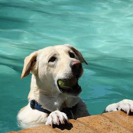 by Pierre van Aswegen - Animals - Dogs Playing
