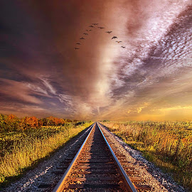 Walk The Line by Phil Koch - Transportation Railway Tracks ( trending, sunrise, shadow, rural, endless, fineart, sun, canon, unity, pastel, popular, arts, meadow, wisconsin, traintracks, green, fallcolors, horizon, sunlight, field, light, peace, earth, shadows, autumn, travel,  )