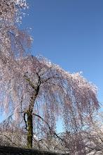 Photo: 永山