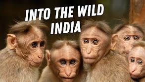 Into the Wild India thumbnail