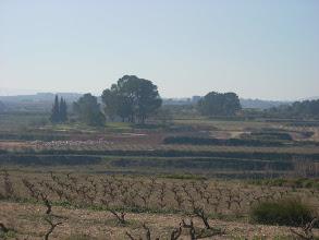 """Photo: Panoràmica de l'""""Arboleda"""" (només queda dempeus l'Arbreda de Dalt), vist des de dalt del Camí de la Font del Povil."""