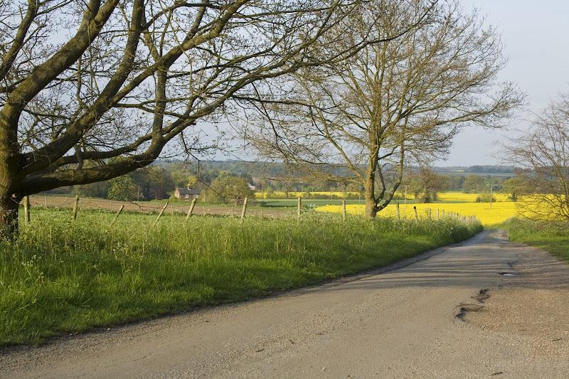 Photo: Yellow - Part 2 - Suffolk,UK