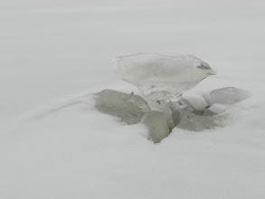 Photo: 012 A (n)ice mushroom