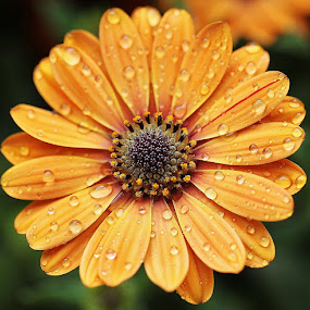 Pumpkin's color- by Giovanna Pagliai - Flowers Single Flower ( plant, nature, season, fresh, pumpkin, colors )