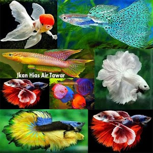 Ornamental fish freshwater android apps on google play for Decorative pond fish crossword