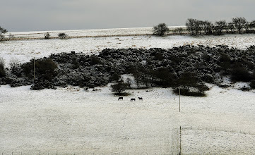 Photo: Snow on the high ground of the Yorkshire Wolds at Millington Pastures, near Pocklington, brings a taste of the winter weather and snow that is forecast to effect may areas of the UK in coming days. PRESS ASSOCIATION Photo. Picture date: Sunday January 13, 2013. See PA story WEATHER Snow. Photo credit should read: John Giles/PA Wire