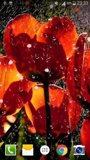 Rose Raindrop Live Wallpaper  screenshots 3