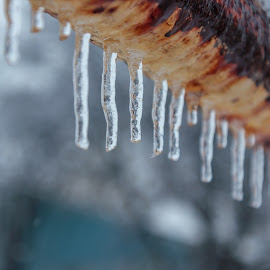 Frozen by Kathy Suttles - Nature Up Close Other Natural Objects