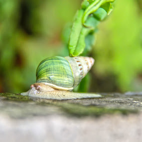 the little GREEN by Wibi Prayogo - Animals Other