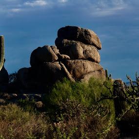 Desert morning by Lyn Simuns - Landscapes Deserts ( sunrise, desert, morning )