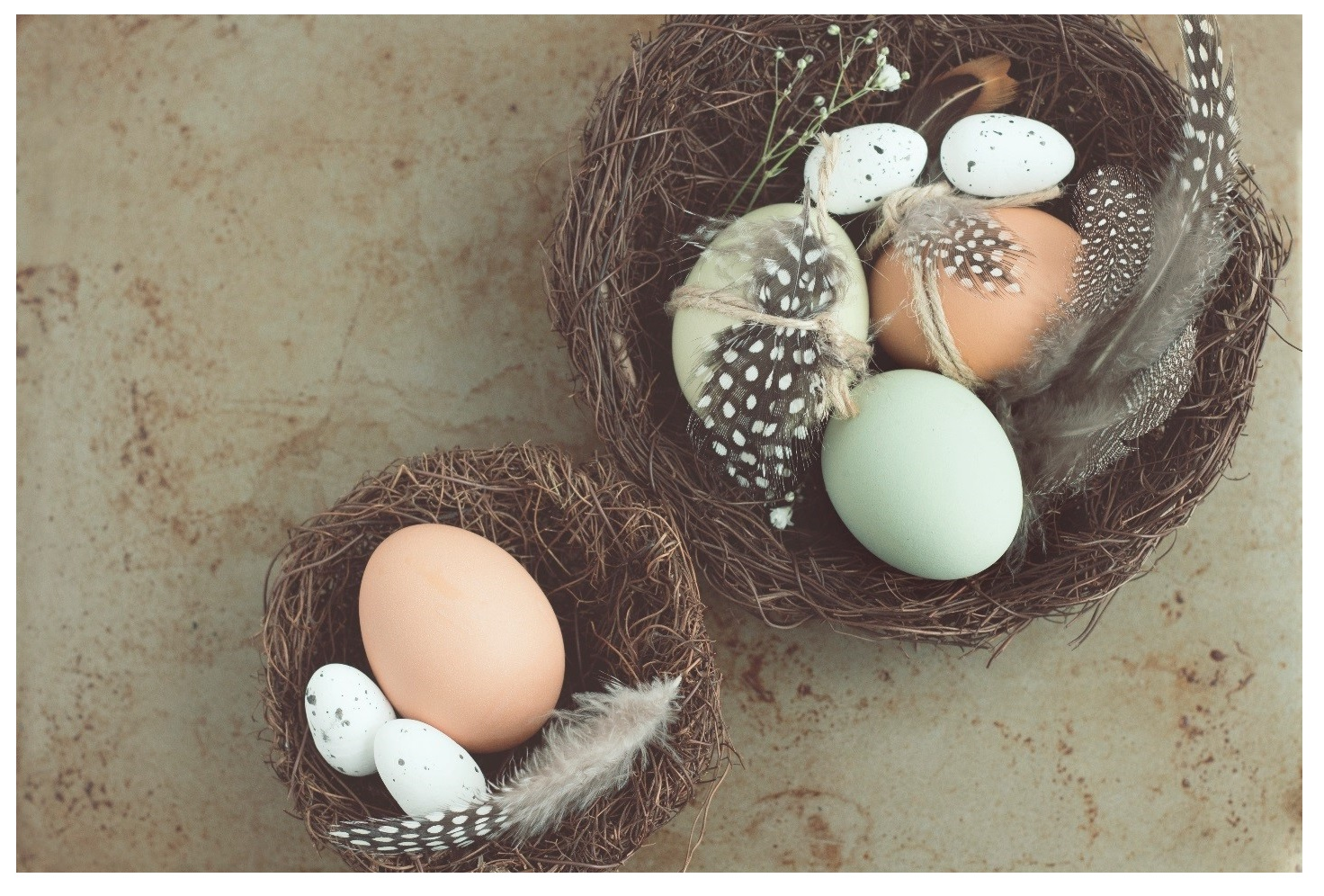 feather eggs 2