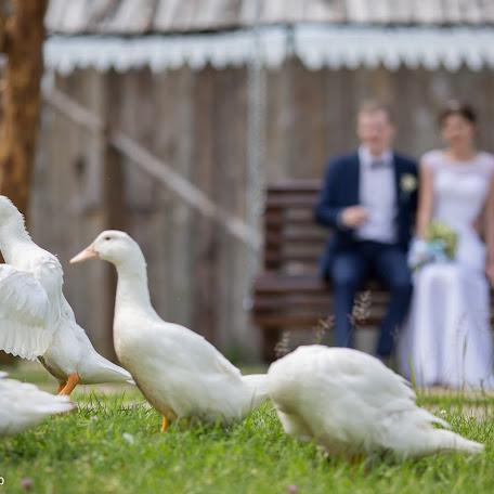 Wedding photographer Mikhail Kuznecov (Mihaxxi). Photo of 28.06.2016