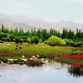 by Shambaditya Das - Novices Only Flowers & Plants