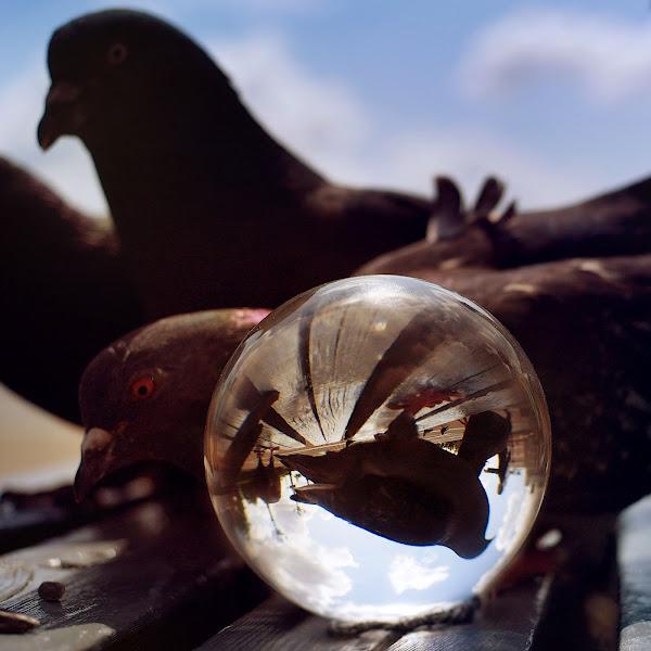 Photo: Pigeon mafia1